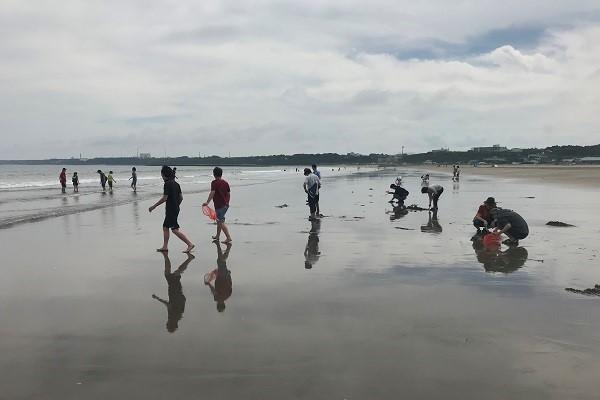 浜辺で潮干狩りをする風景(遠景)
