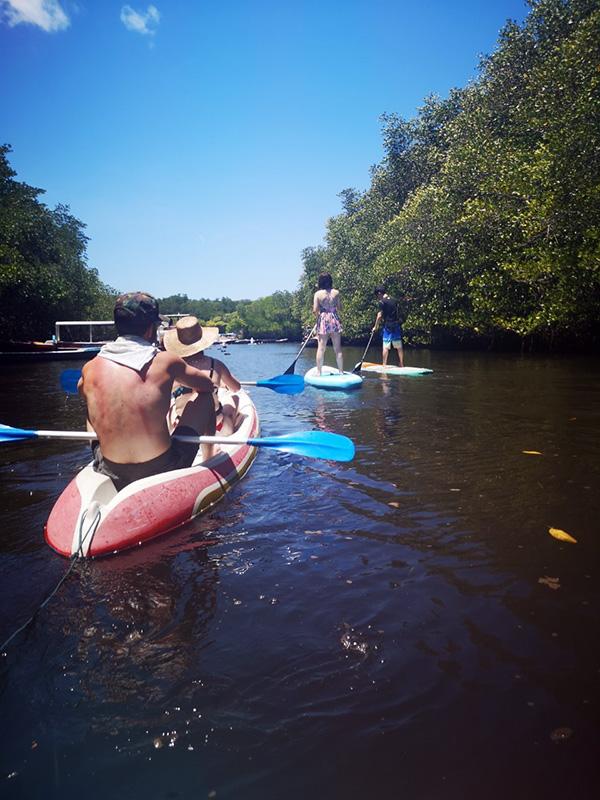 マングローブ林の中を進むSUP